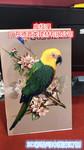 2.0厚鸚鵡鳥3D彩繪鋁單板具觀賞性