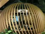 溫馨餐廳'島籠式半弧鋁方通'木紋色